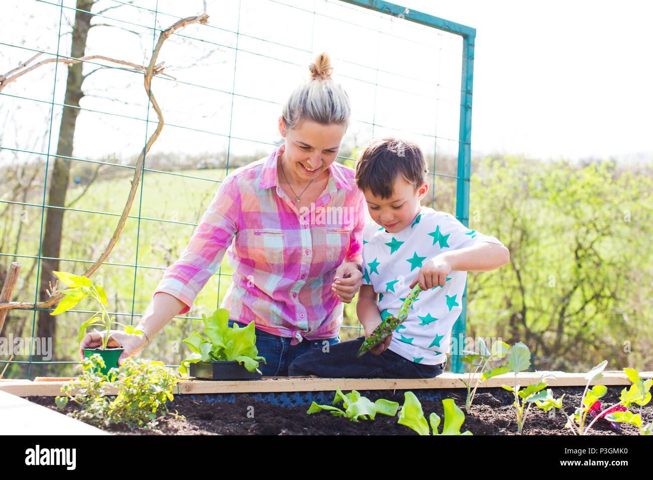 Bella madre e suo figlio biondo piantare insalata del letto sollevata nel suo giardino Immagini Stock