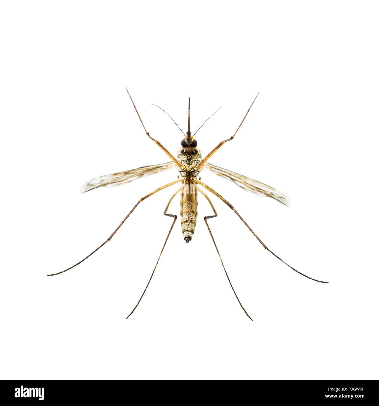 La Febbre Gialla La Malaria O Zika Infettate Da Virus Insetto