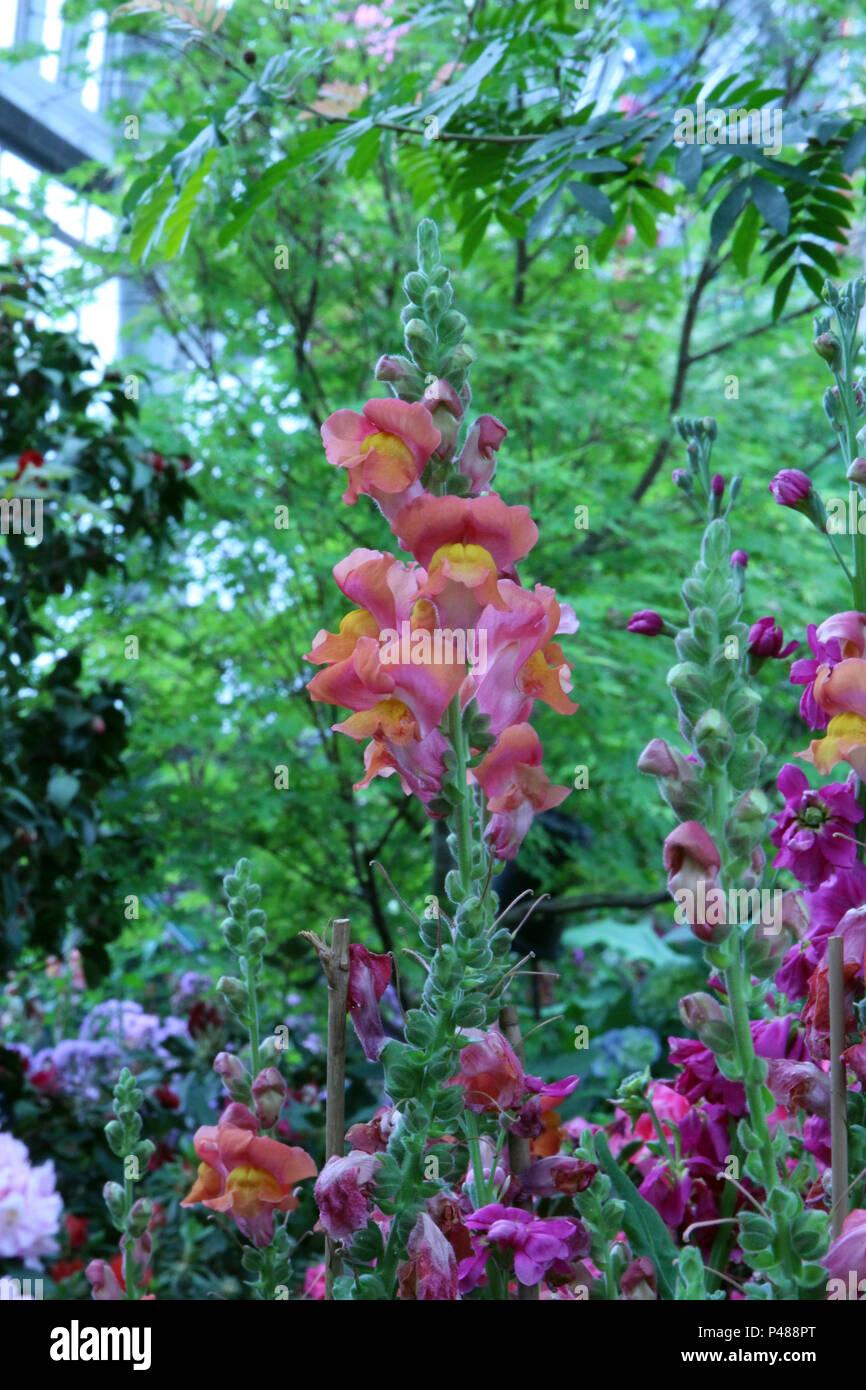 Orange Flower Garland Immagini   Orange Flower Garland Fotos Stock ... 22021c214e44