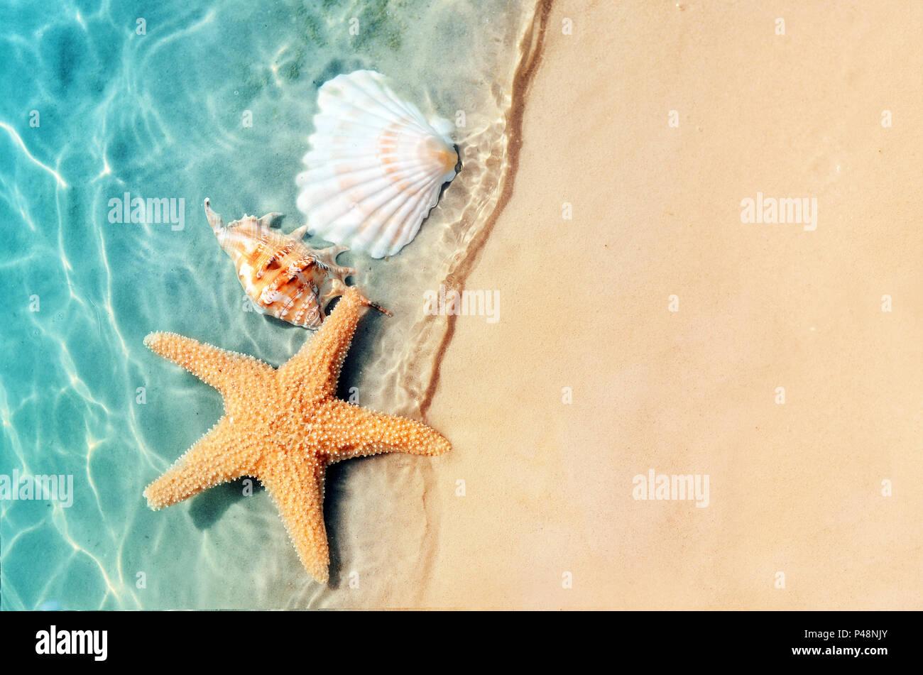 Stella Marina E Conchiglia In Estate Spiaggia In Acqua Di Mare