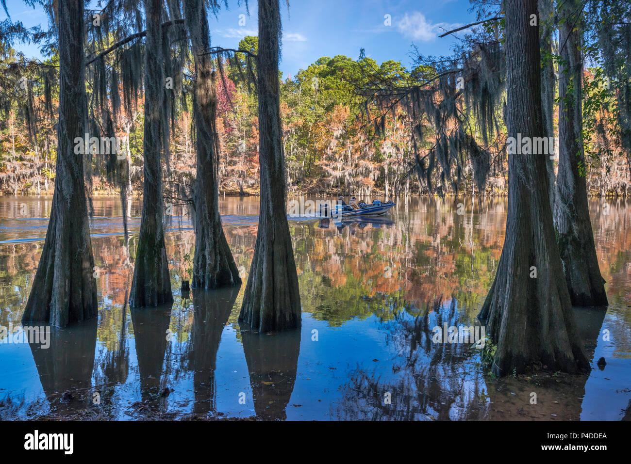 Due uomini in motoscafo, cipresso calvo alberi a Big Cypress Bayou a caddo Lake State Park, Texas, Stati Uniti d'America Immagini Stock
