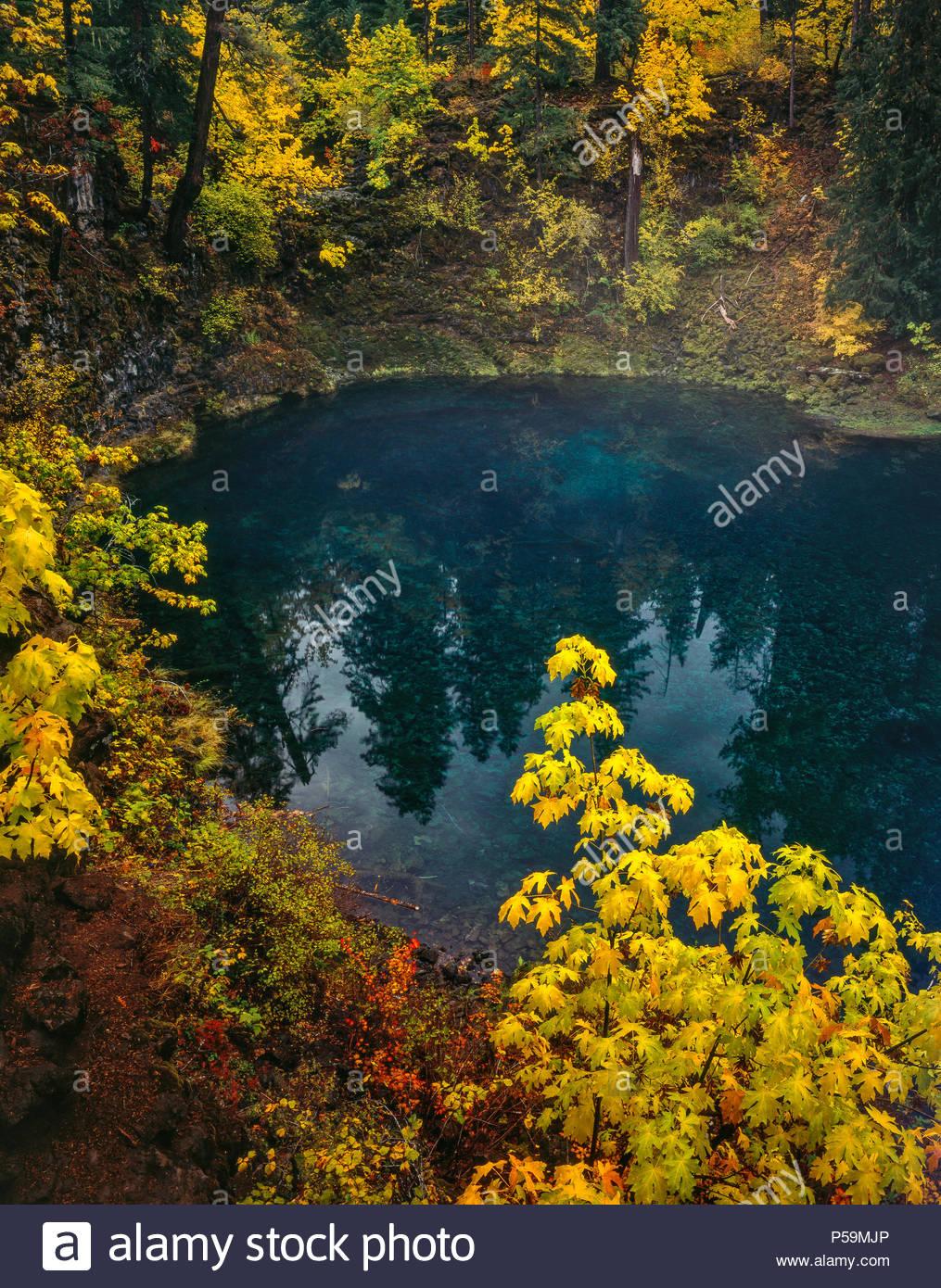 Tamolitch Falls, blu piscina, McKenzie River National paesaggistico e selvaggio fiume Willamette National Forest, Oregon Immagini Stock