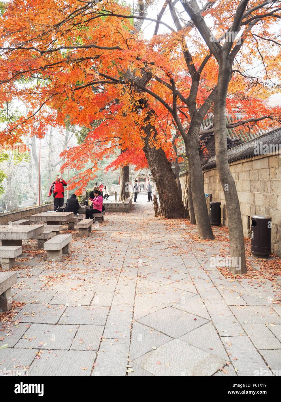 Turista che visita il Taiqing gong o tempio di purezza suprema sulla montagna Lau durante l'autunno Immagini Stock