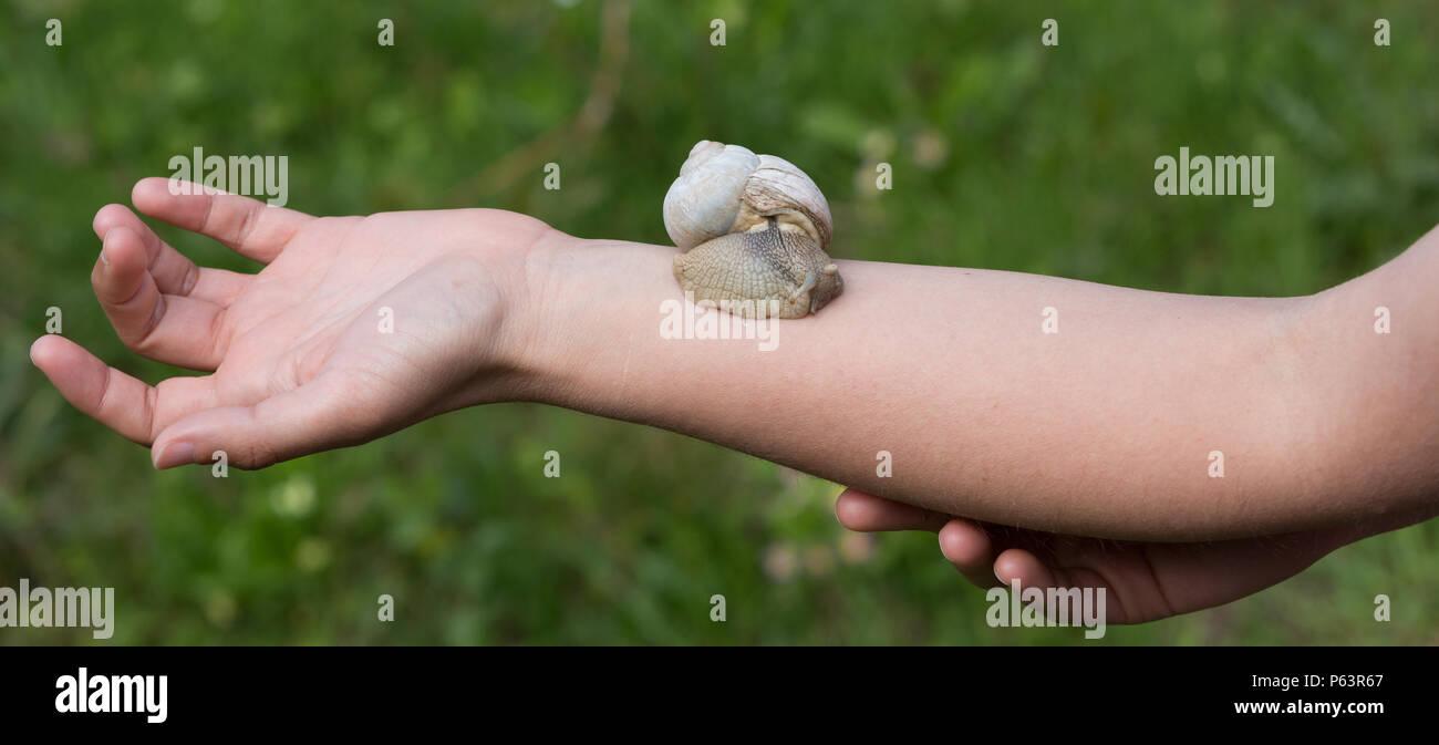 Snail slime trattamento della pelle sul braccio di una donna. Immagini Stock