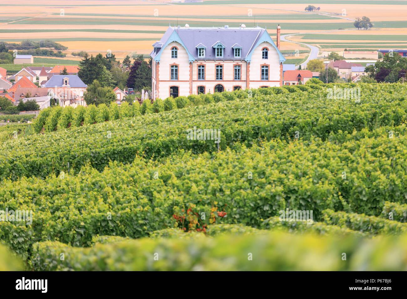 Vigneti Sacy Reims Marne Grand Est Francia Immagini Stock