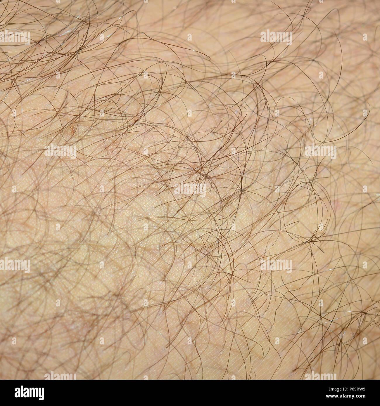 Close up dettaglio della pelle umana con i capelli. Mans hairy gamba . Immagini Stock
