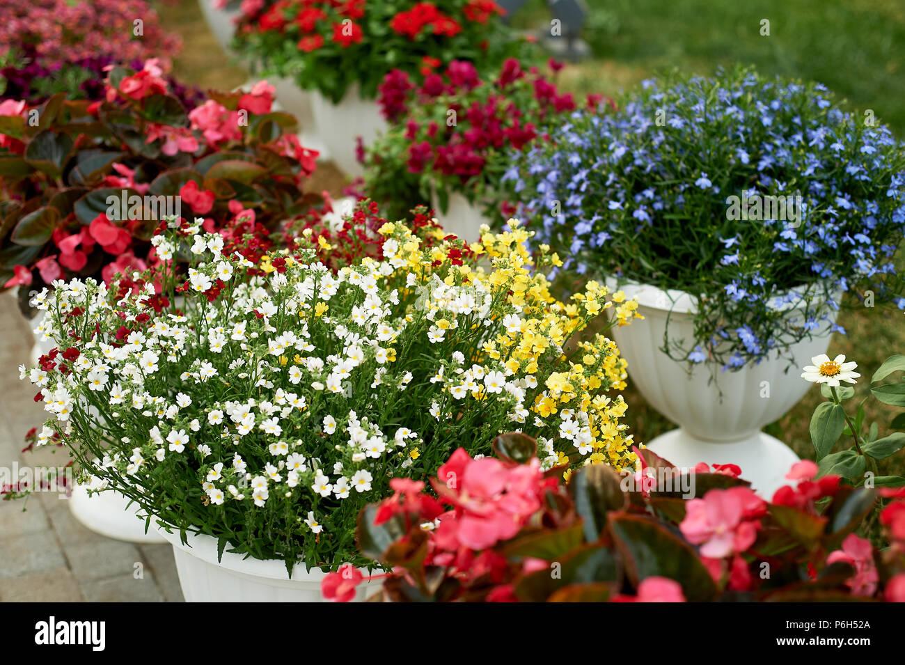 Decorazione Vasi Da Giardino : I vasi da fiori di colore bianco con fiori all esterno la