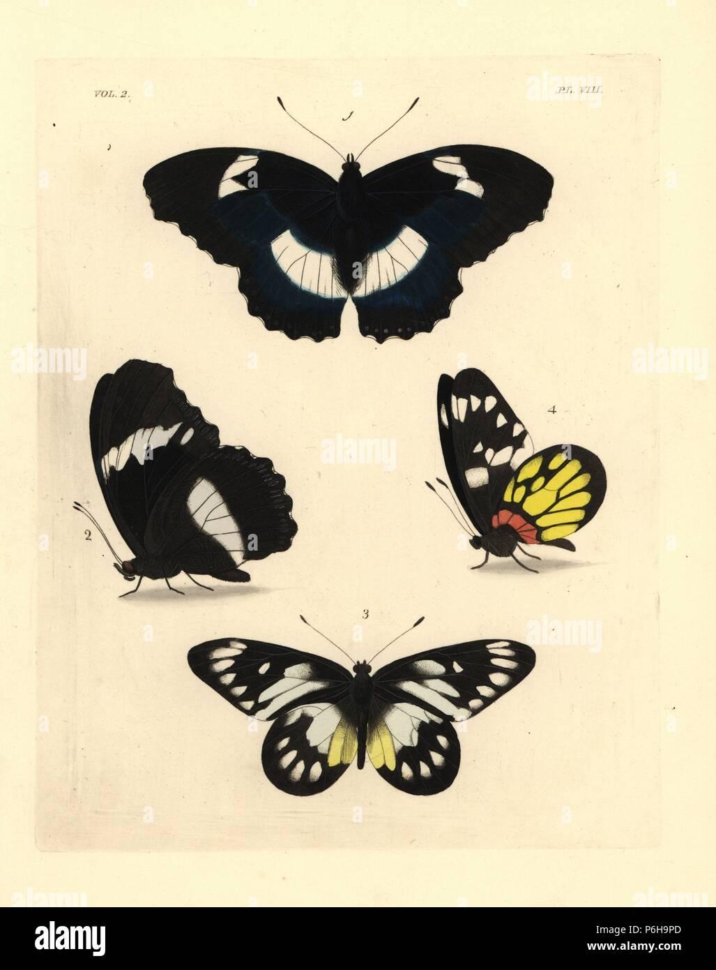 Blue Butterfly diadem, Hypolimnas salmacis (Nymphalis salmacis) 1,2, ventrale e dorsale, e redbase jezebel, Delias pasithoe (Sarcococca pasithoe) 3,4. Handcolored litografia dal John O. Westwood la nuova edizione di Dru Drury 'illustrazioni di Entomologia esotici,' Bohn, Londra, 1837. Foto Stock