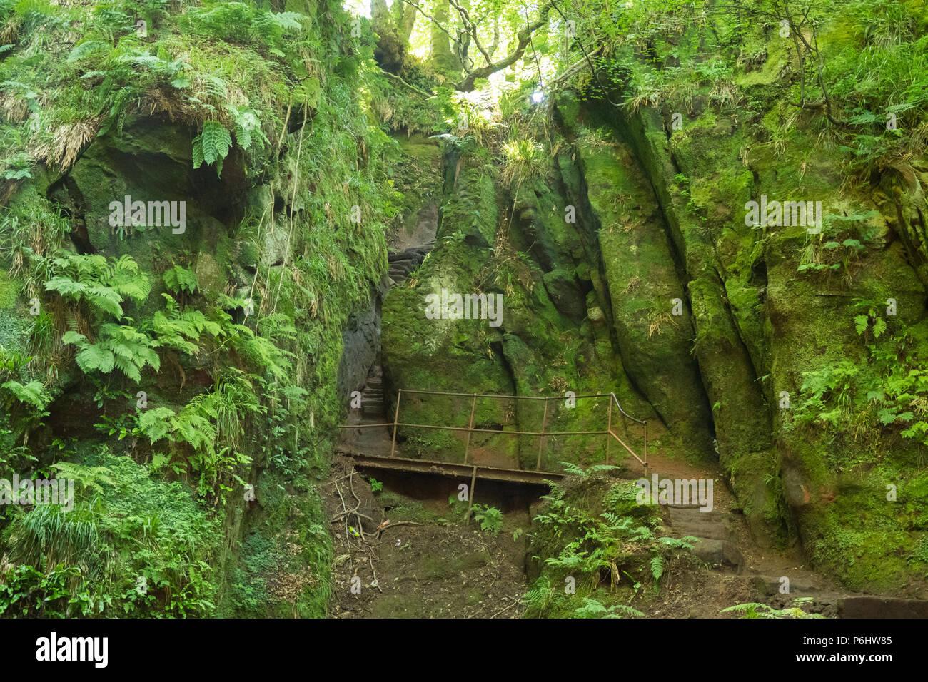 Passi, noto come Jacobs scaletta che porta giù in Finnich Glen, a Killearn, Scotland, Regno Unito Immagini Stock