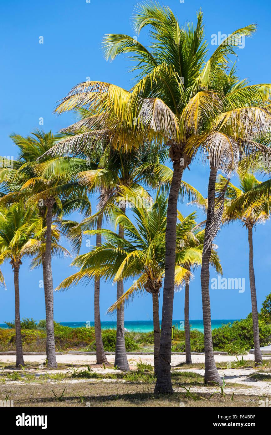 Cuba, Jardines del Rey, Cayo Guillermo, Playa El Paso, palme nei giardini del Sol Hotel Guillermo Immagini Stock