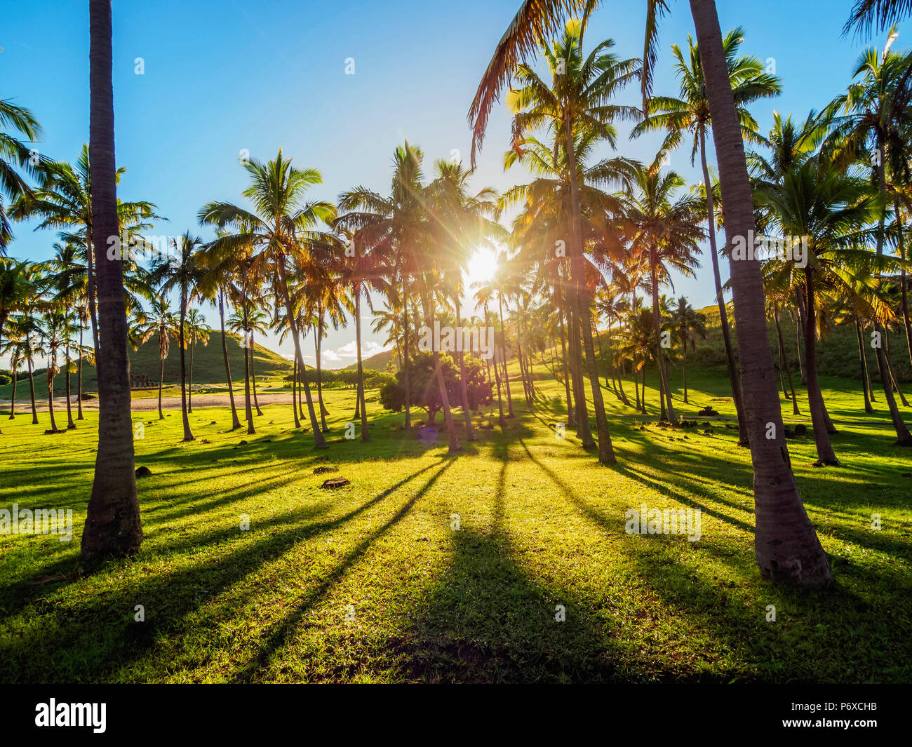 Palme da la spiaggia di Anakena, Isola di Pasqua, Cile Immagini Stock