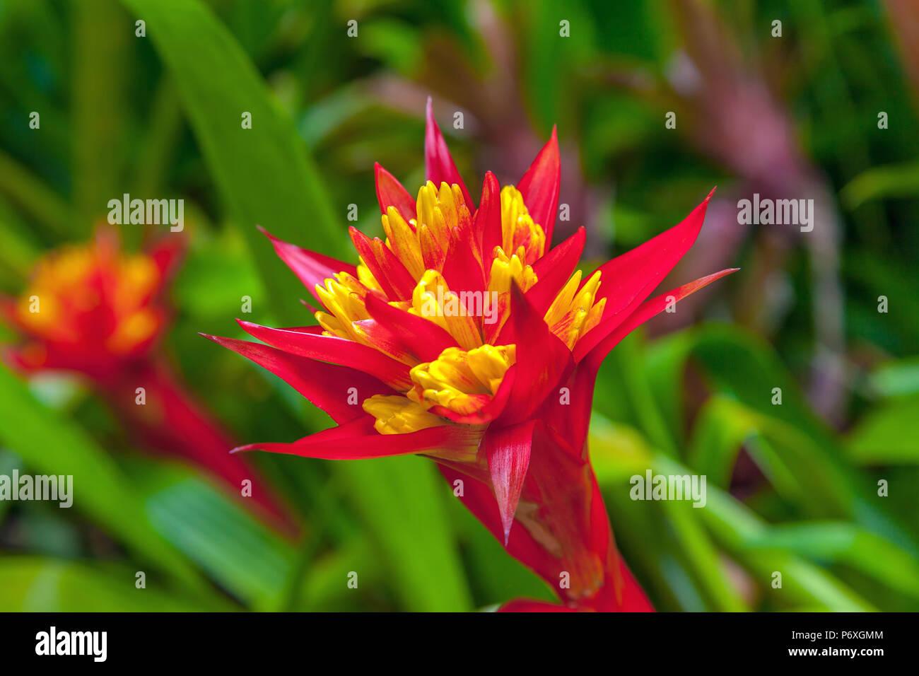 Fiori Esotici.Rosso Di Fiori Esotici Foto Immagine Stock 210796228 Alamy