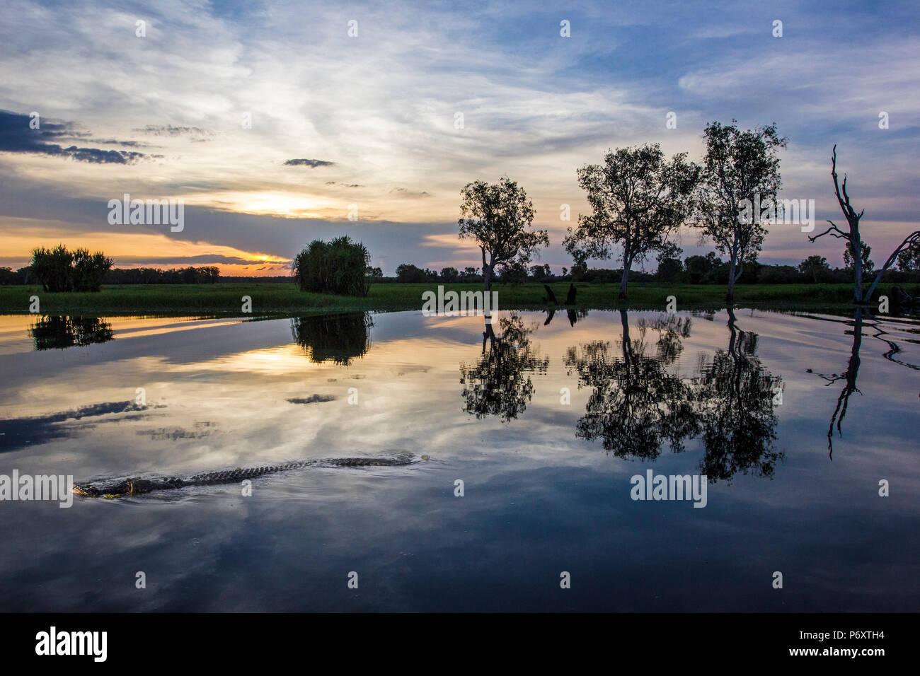 Kakadu National Park, l'estremità superiore del Territorio del Nord, l'Australia. Cannibal acqua salata croc in acqua gialla Billabong Foto Stock