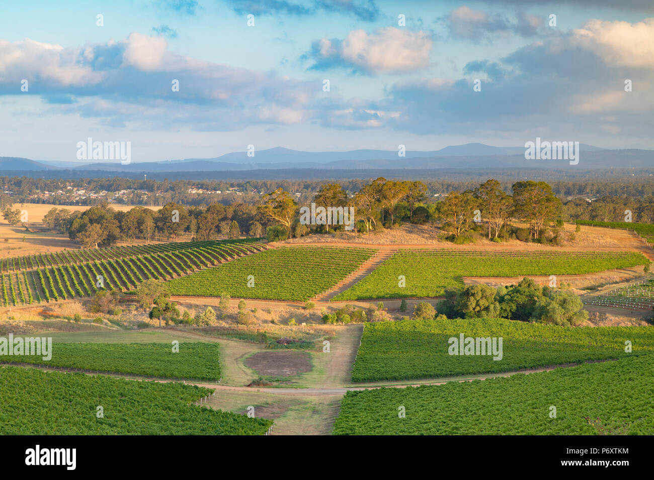 Vista dei vigneti, la Hunter Valley, Nuovo Galles del Sud, Australia Immagini Stock