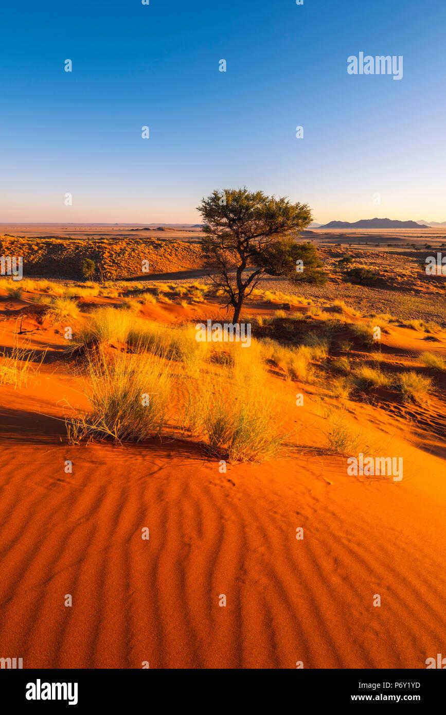 Namib-Naukluft National Park, Namibia, Africa. Pietrificate dune rosse. Immagini Stock