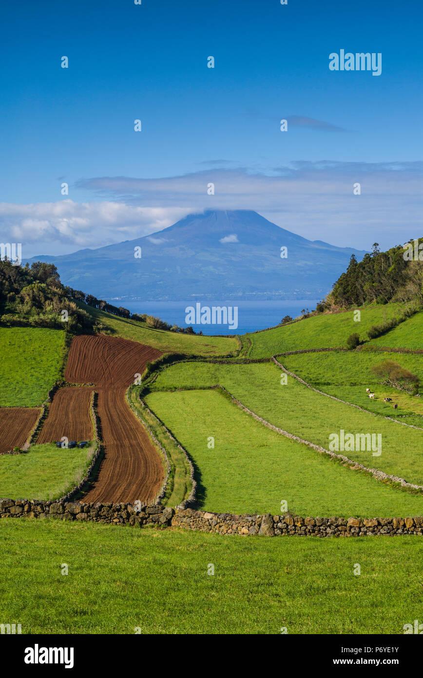 Portogallo Azzorre, Sao Jorge Island, Rosais dei campi e il Vulcano Pico Immagini Stock