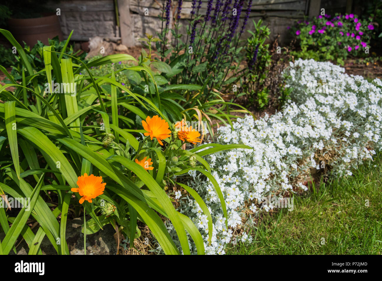 Fiori Da Giardino In Montagna fiori da giardino - calendula (tagetes), neve-su-il-montagna