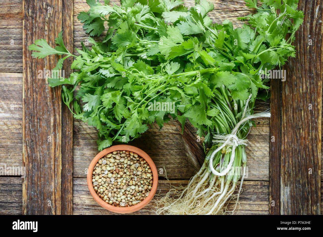 Fresco verde coriandolo, foglie di coriandolo e i semi secchi su una superficie di legno. Messa a fuoco selettiva Immagini Stock