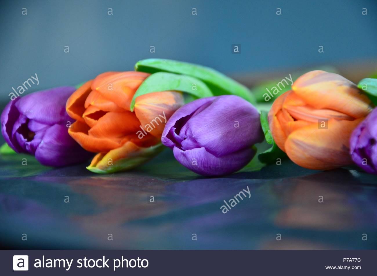 Decorazioni Matrimonio Arancione : I tulipani arancione e viola tulipani colorati decorazioni di