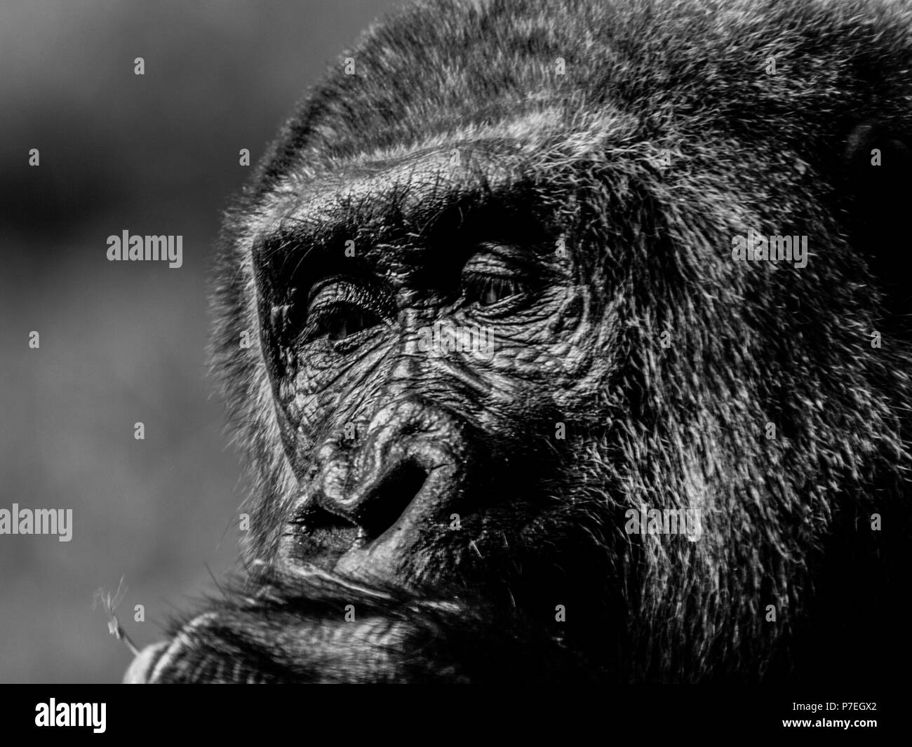 Approfondimento degli animali vicino facciale parziale Immagini Stock