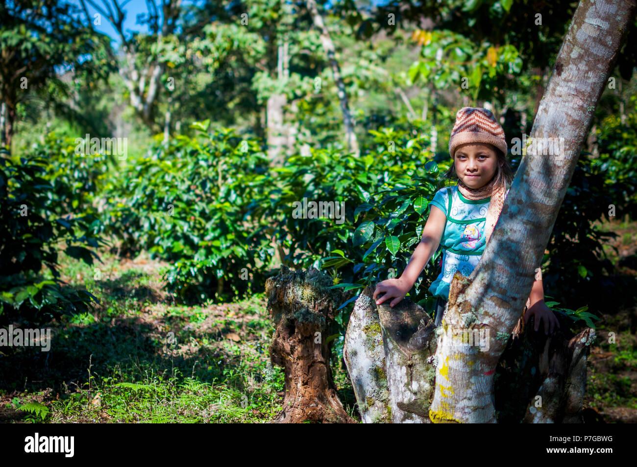 Con motivo del día Internacional de la Niña. Niña caficultora de Tziscao. La Trinitaria #Chiapas Immagini Stock