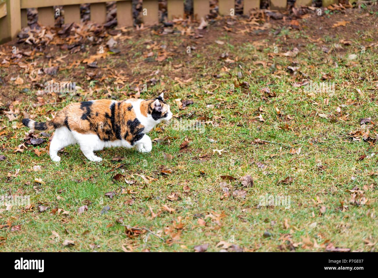 Recinzione Giardino Per Gatti.Profilo Di Gatti Calico Curioso Esplorando Cortile Da Giardino