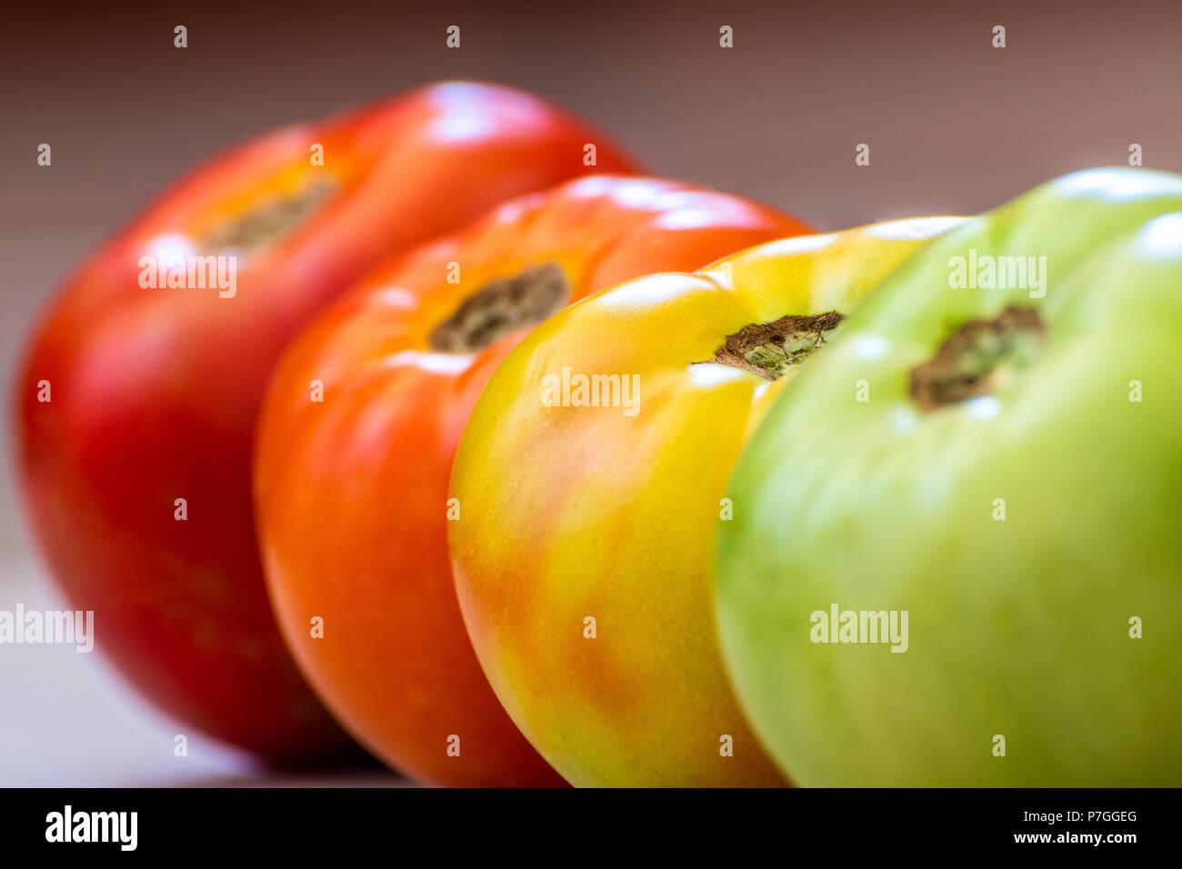Pomodori a diversi stadi di maturazione. Concetto. La messa a fuoco è su girando il pomodoro. Gli stadi sono verde e poi girando quindi luce in rosso e poi in rosso. Immagini Stock