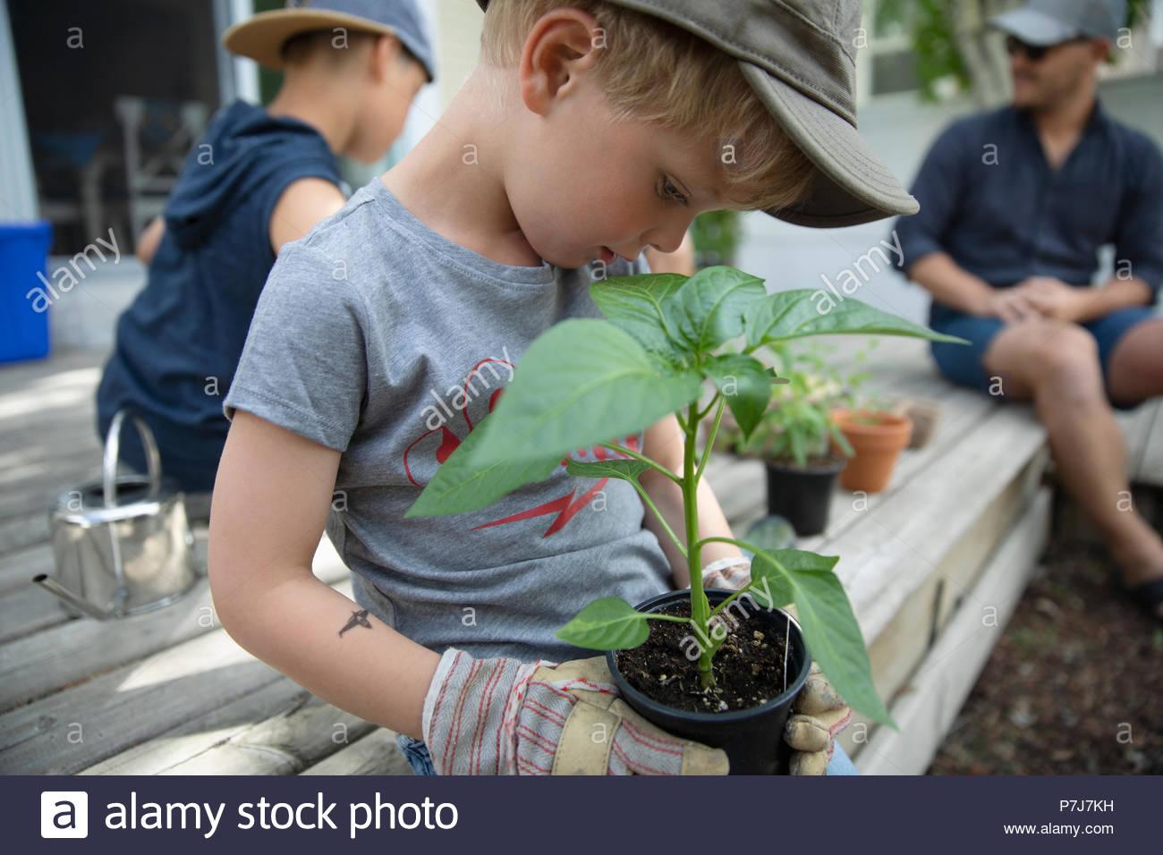 Curioso boy piantagione di piante in vaso Immagini Stock