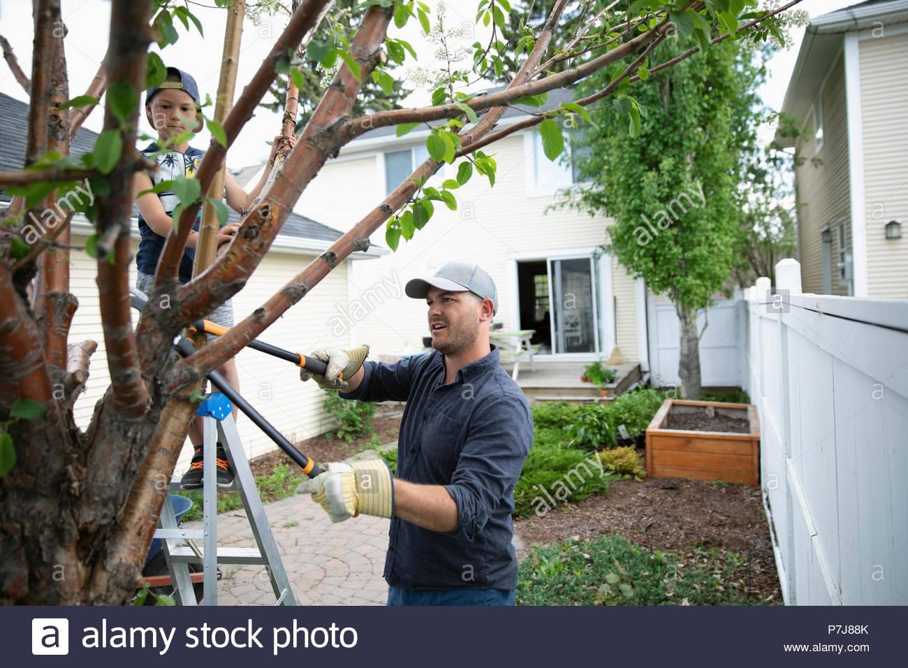 Padre e figlio facendo il lavoro di cantiere, la potatura di piante in back yard Immagini Stock