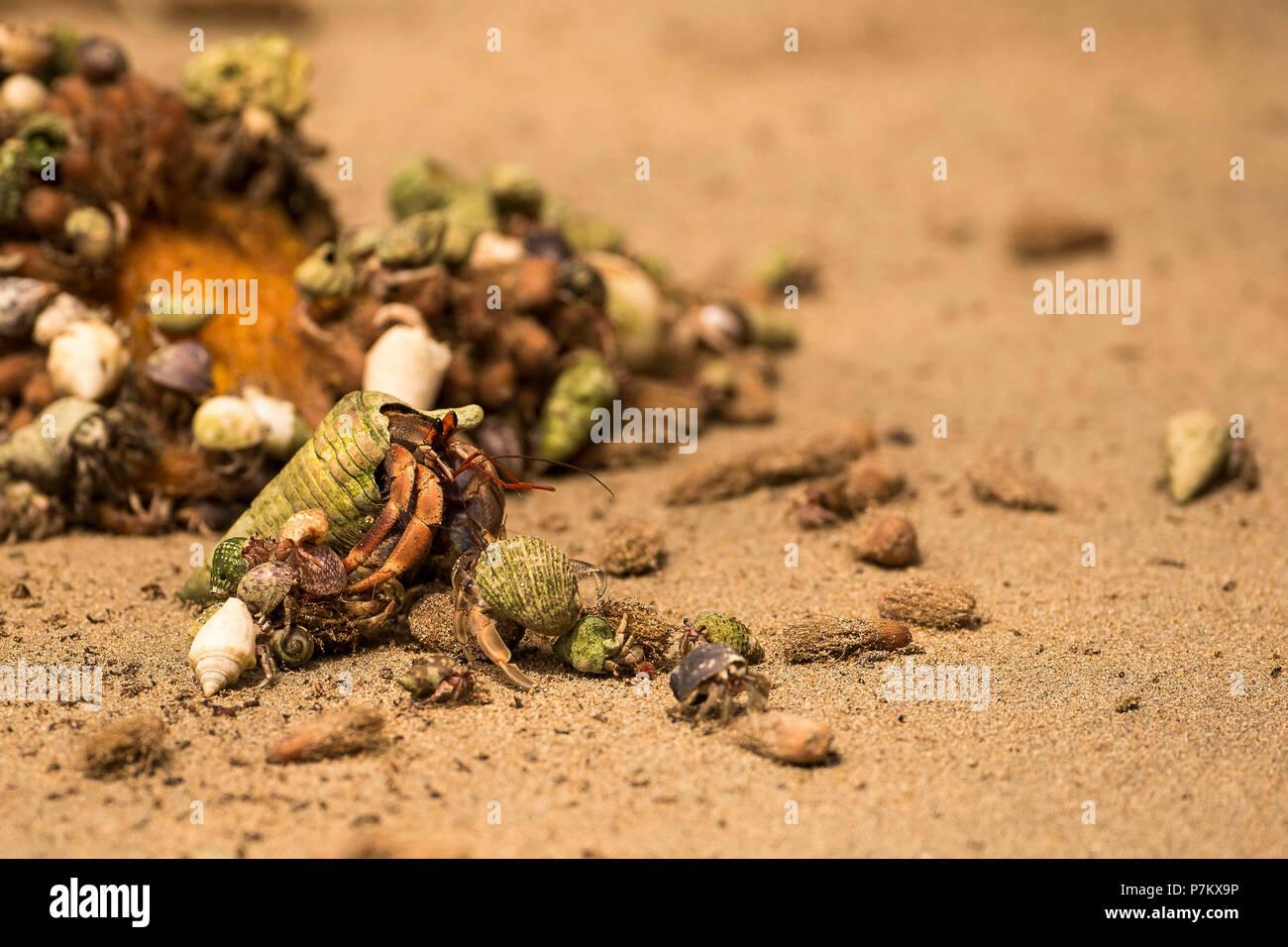 Eremita granchi sulla spiaggia Immagini Stock