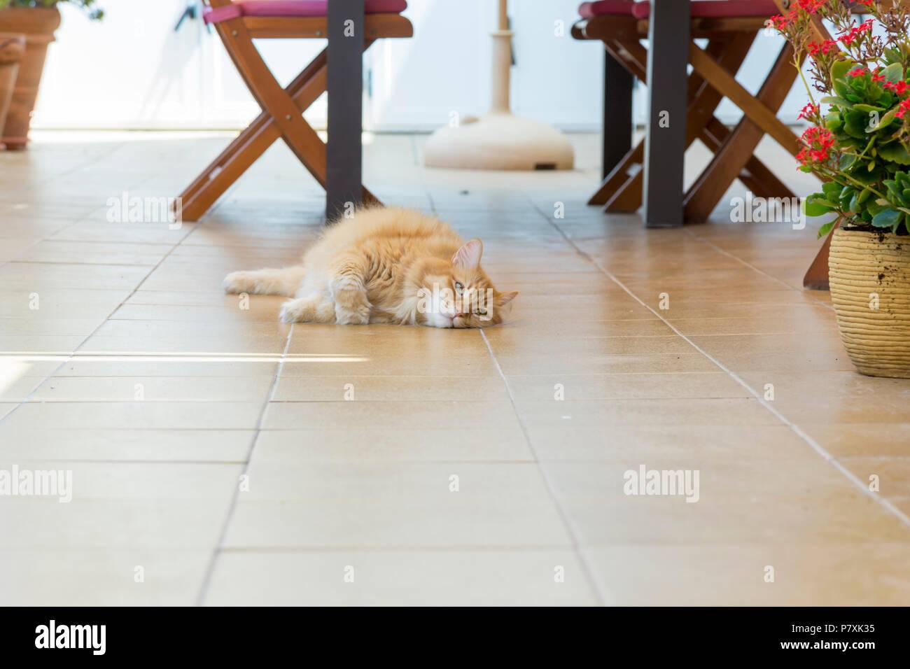 Gatto che sembra essere gettati in qualsiasi modo sul piano terrazzo, cercando il luogo più cool Immagini Stock