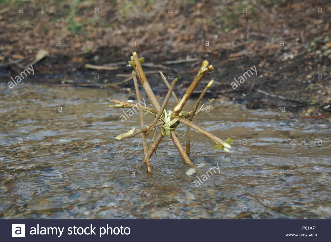 Piccolo danaide in tedesco rivolo Foto Stock