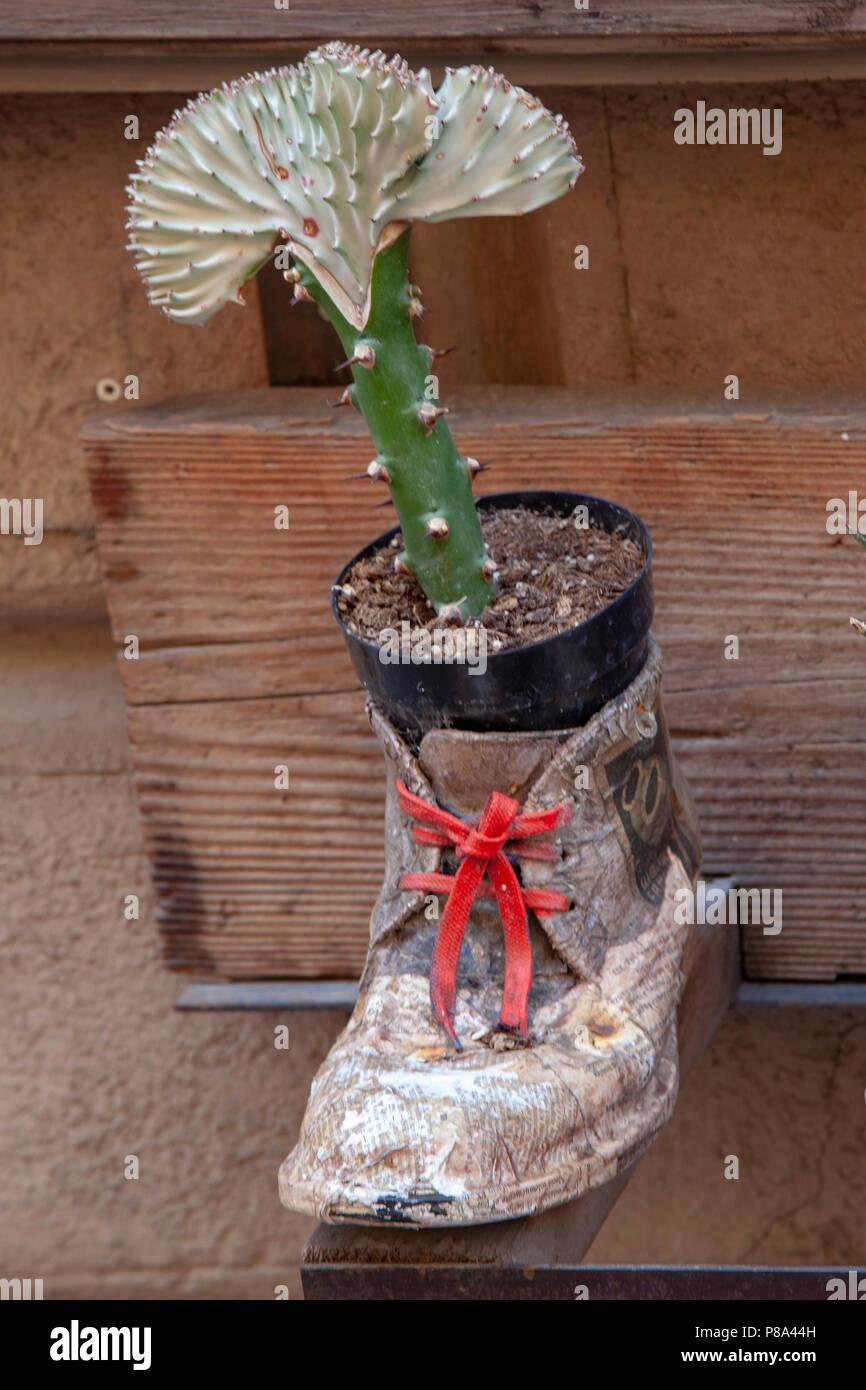 """Eccentrici porta pot con succulenti sul display (Montepulciano - Toscana - Italia). """"Cache-pot farfelu avec plante grasse en exposition. Immagini Stock"""