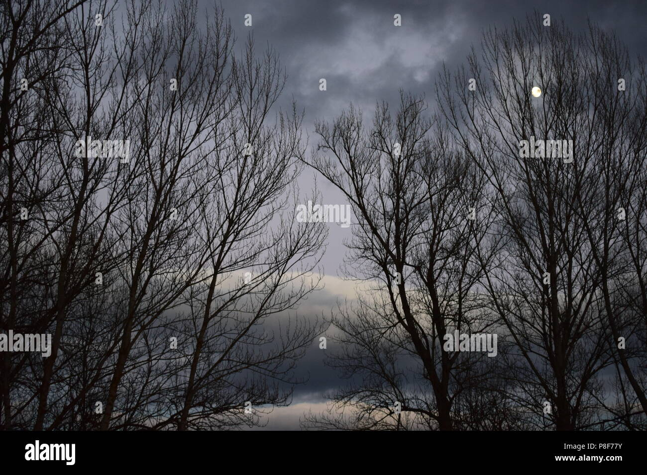 Bosque en invierno, al anochecer antes de la tormenta en Forcadas, pequeña aldea situada en el Bierzo, provincia de León. Immagini Stock