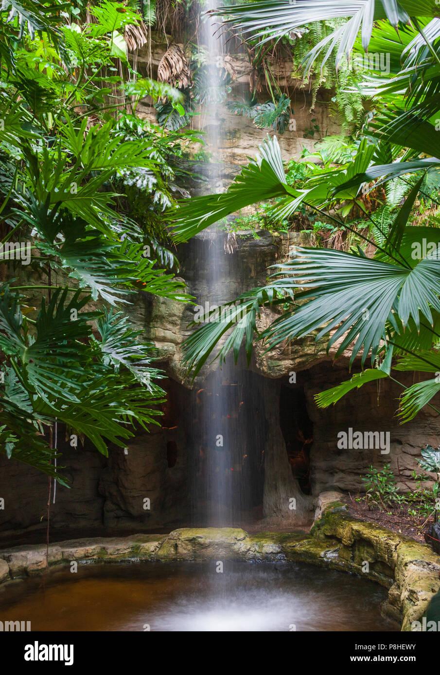 La cascata e piante tropicali in Houston al Conservatory della Farfalla in il Museo di Scienze Naturali di Houston e. Immagini Stock