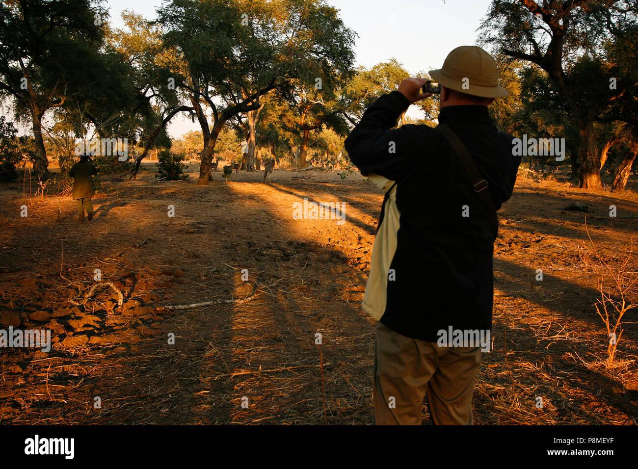 Ranger del Parco e i turisti su Safari a piedi. Parco Nazionale di Mana Pools. Zimbabwe Immagini Stock