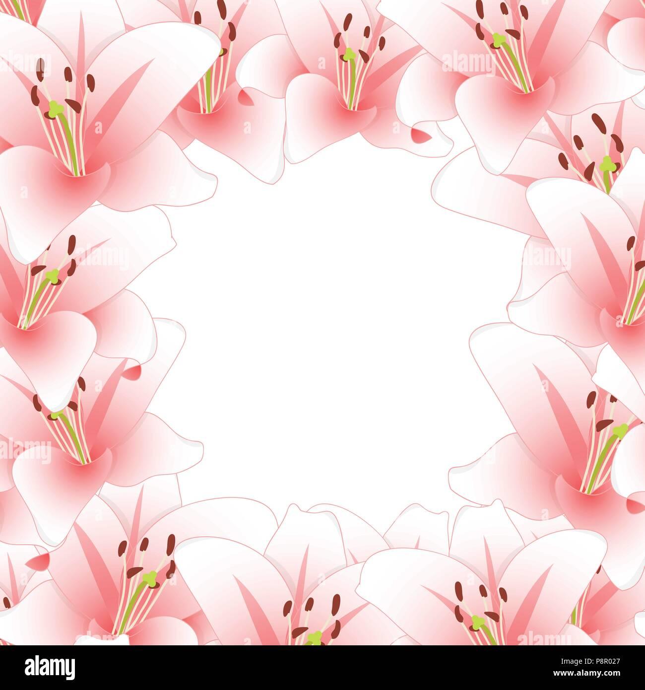 Giglio Colore Rosa Flower Border Isolati Su Sfondo Bianco