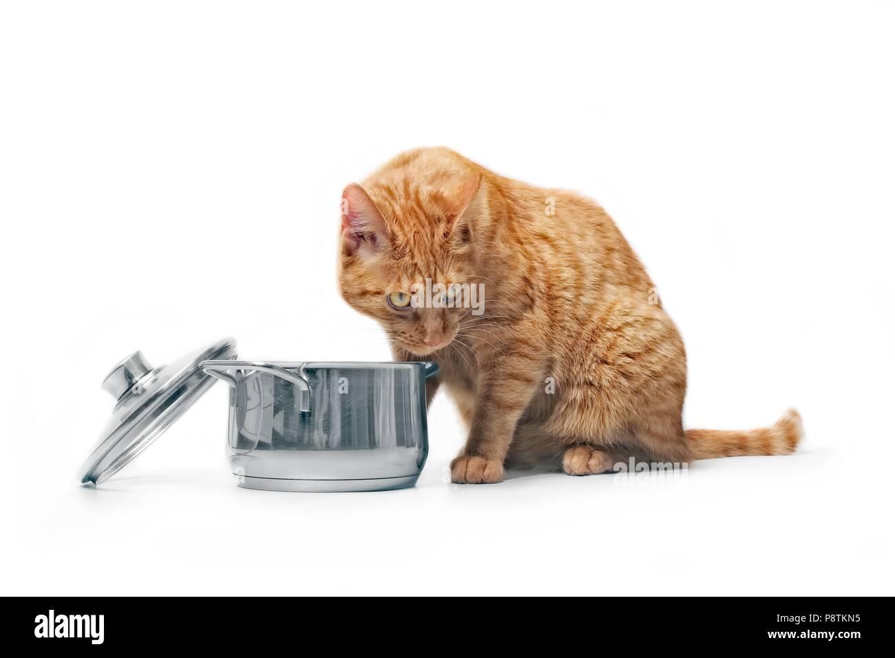Fame ginger cat guardando curioso in una pentola di cottura. Immagini Stock