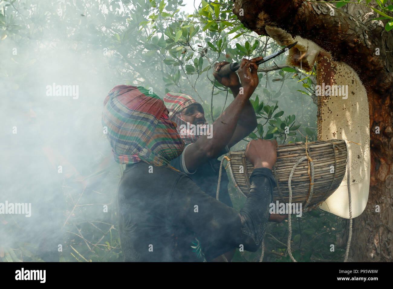 La tradizionale produzione di miele la raccolta in Sundarbans, il mondo la più grande foresta di mangrovie in Bangladesh. Satkhira, Bangladesh. Immagini Stock