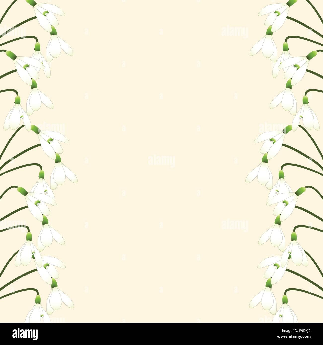 Bianco Fiore Snowdrop Isolato Su Avorio Sfondo Beige Illustrazione