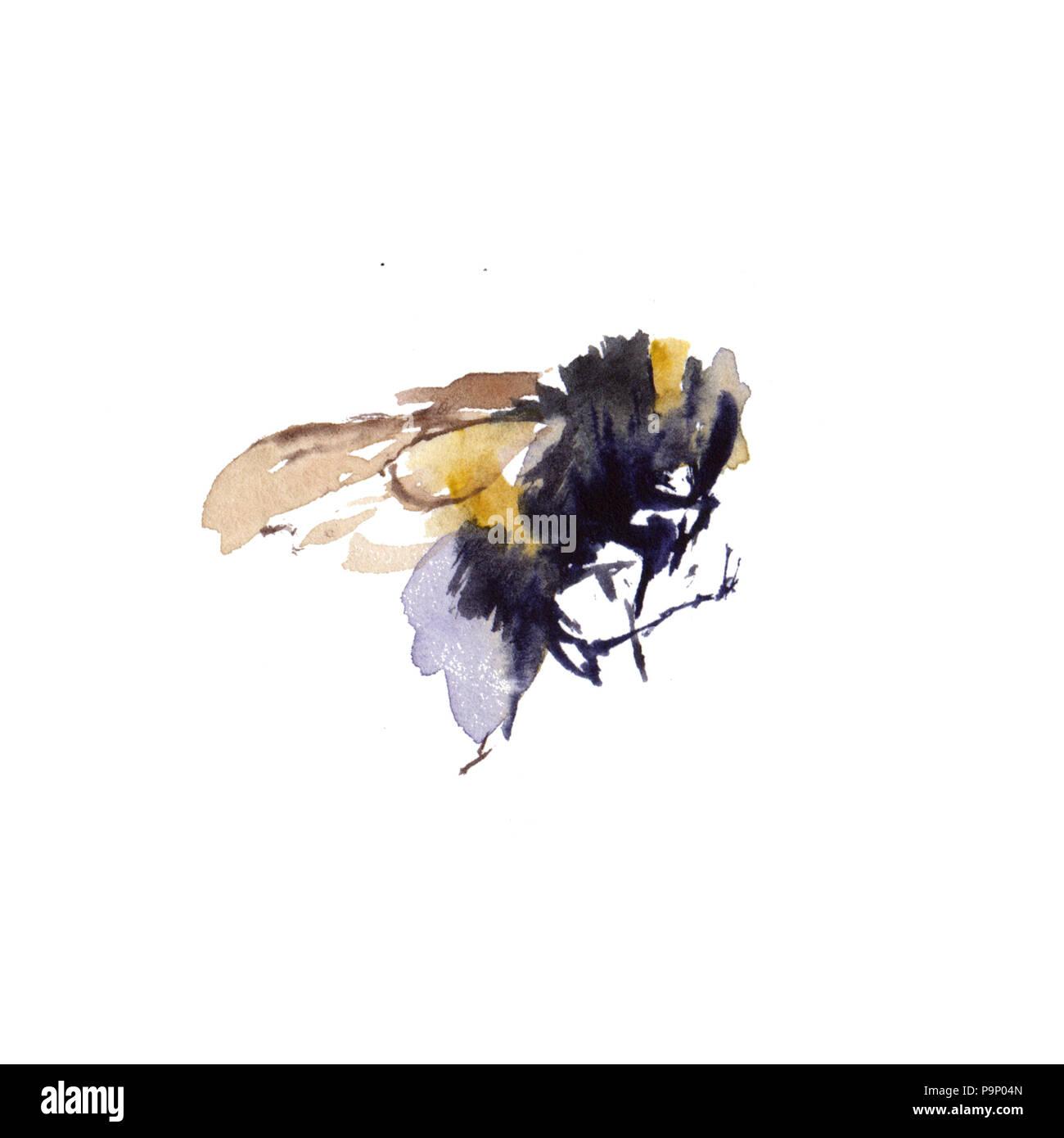 Acquerello api isolati su sfondo bianco. disegnati a mano illustrazione ad acquerello Immagini Stock