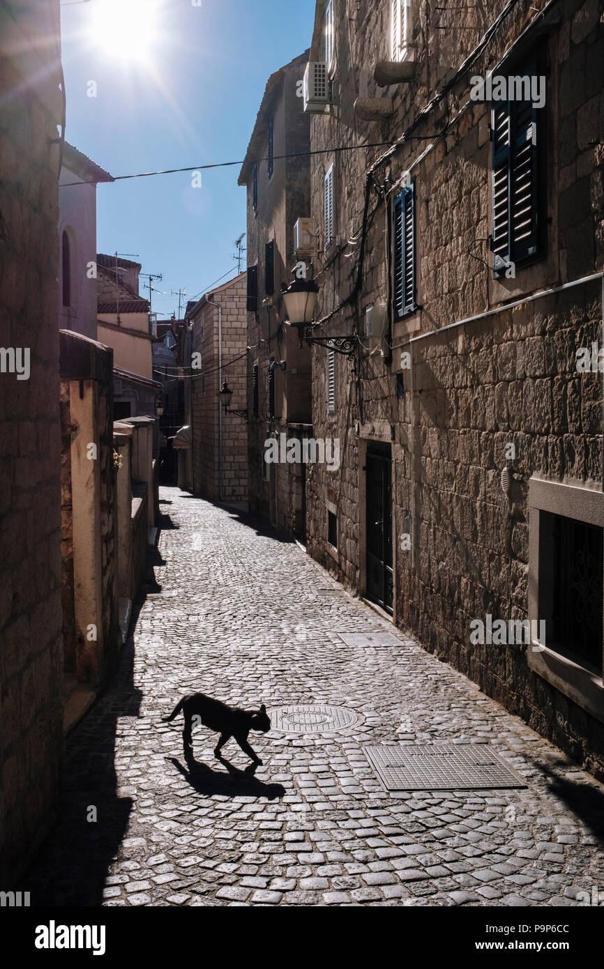Sfortuna Del Gatto Nero Immagini Sfortuna Del Gatto Nero Fotos