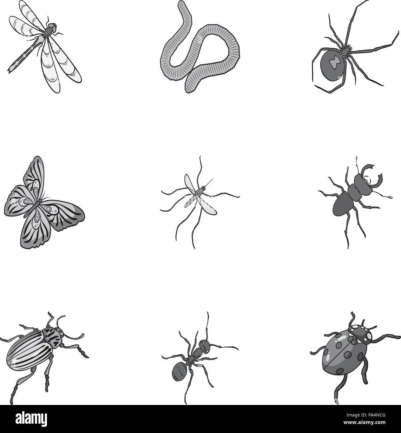 Beetle Vespe Bee Formica Volare Spider Zanzara E Altre