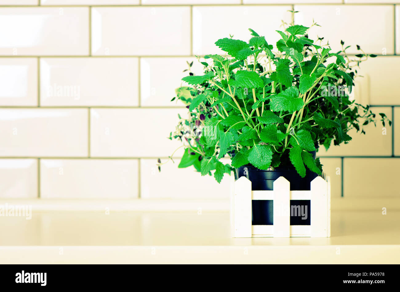 Mint, timo, basilico, prezzemolo - aromatiche erbe organico su ...