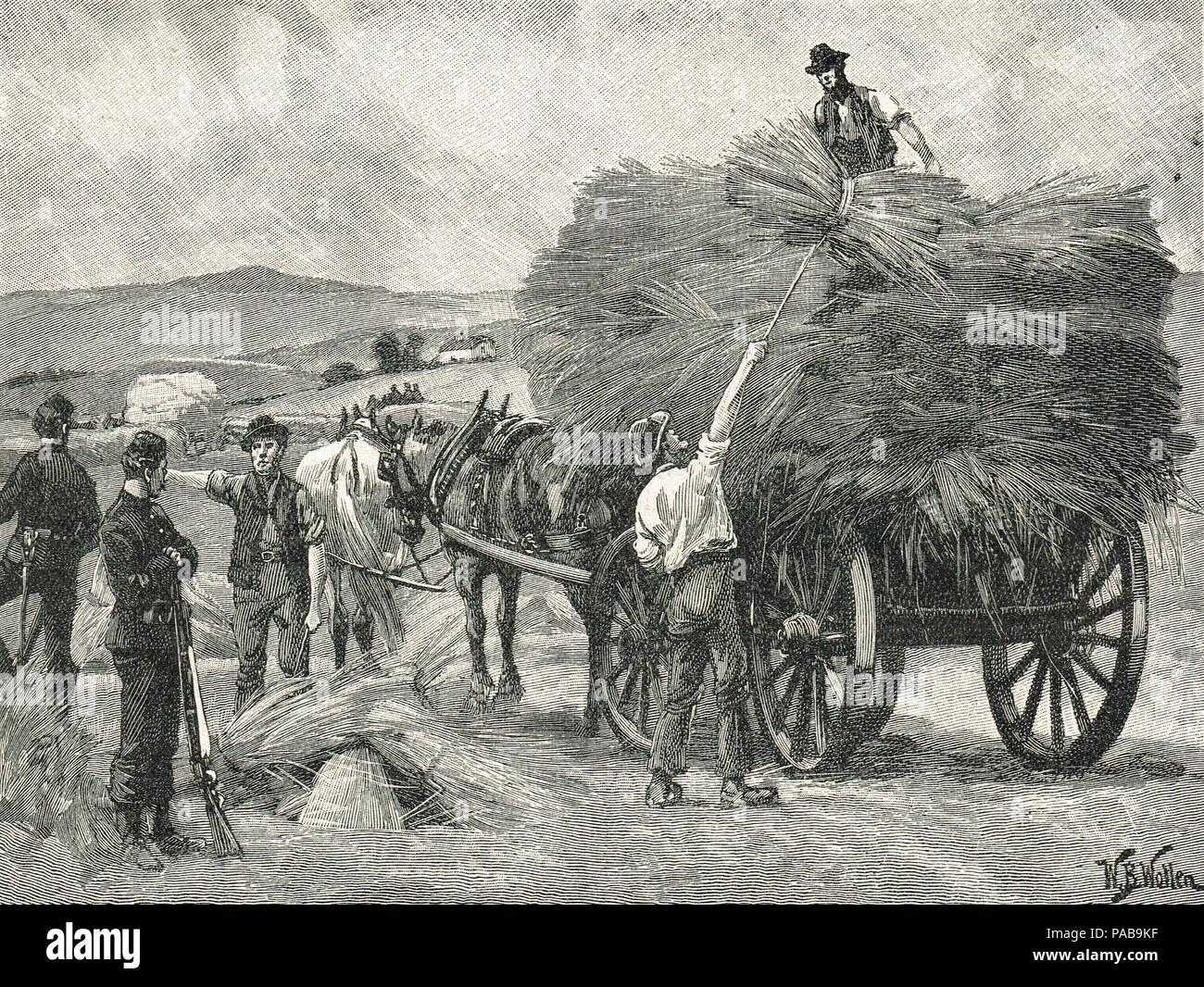 Il salvataggio del Capitano del boicottaggio colture, 1880. Orangemen dalla contea di Cavan e contea di Monaghan la raccolta delle colture, protetto dal xix Royal ussari, e il Royal Irish Constabulary durante la campagna di isolamento dalla Irish National Land League Immagini Stock