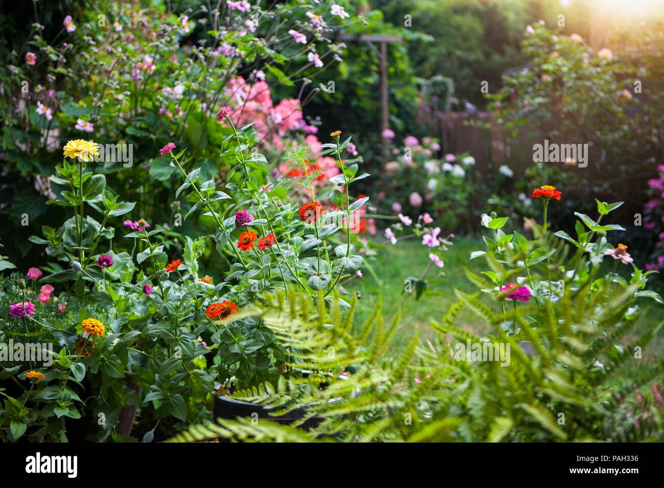 Giardino in estate in piena fioritura Foto Stock