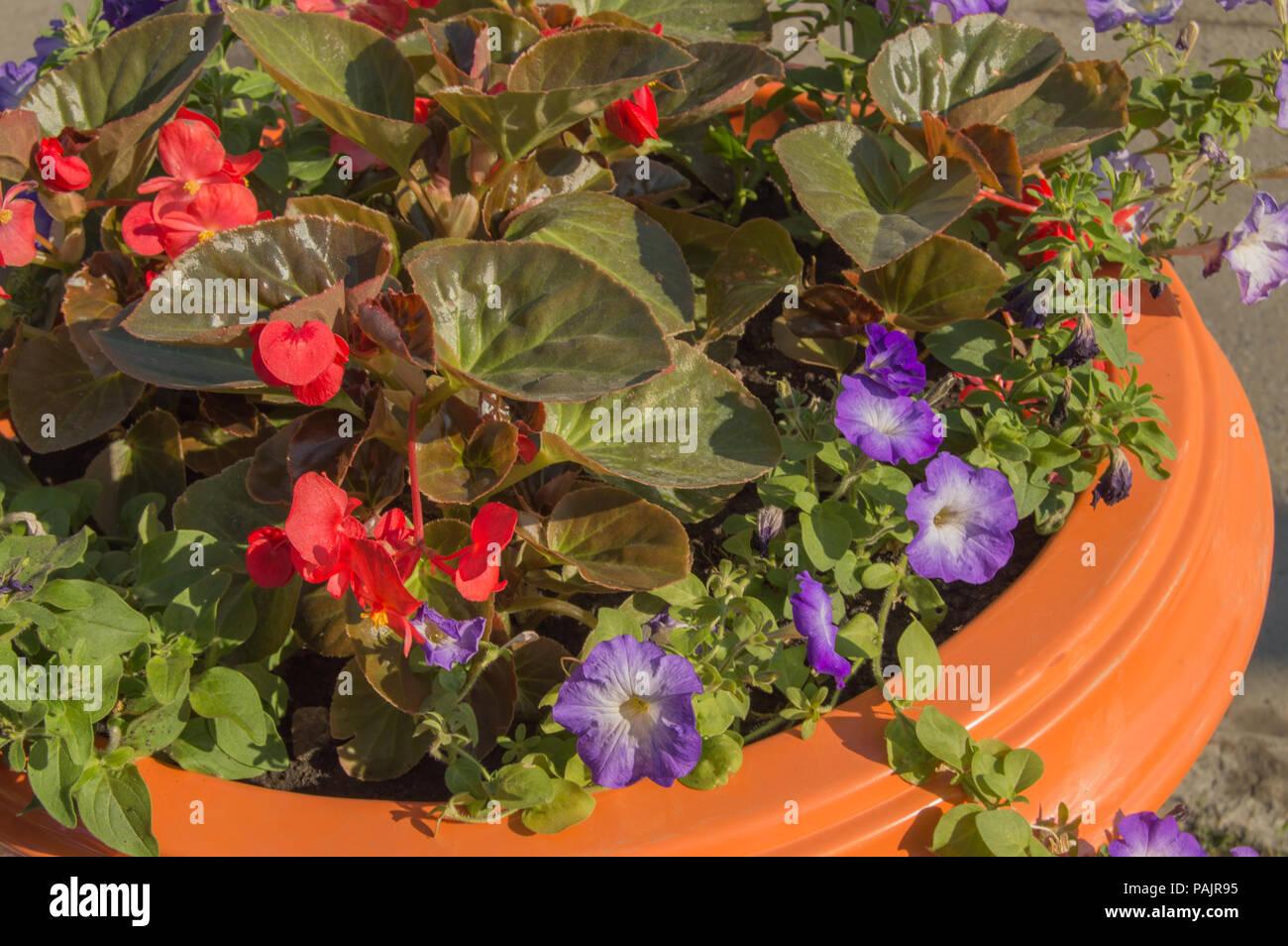Vasi Da Giardino Colorati giardino di fiori colorati in un vaso da fiori, parco e
