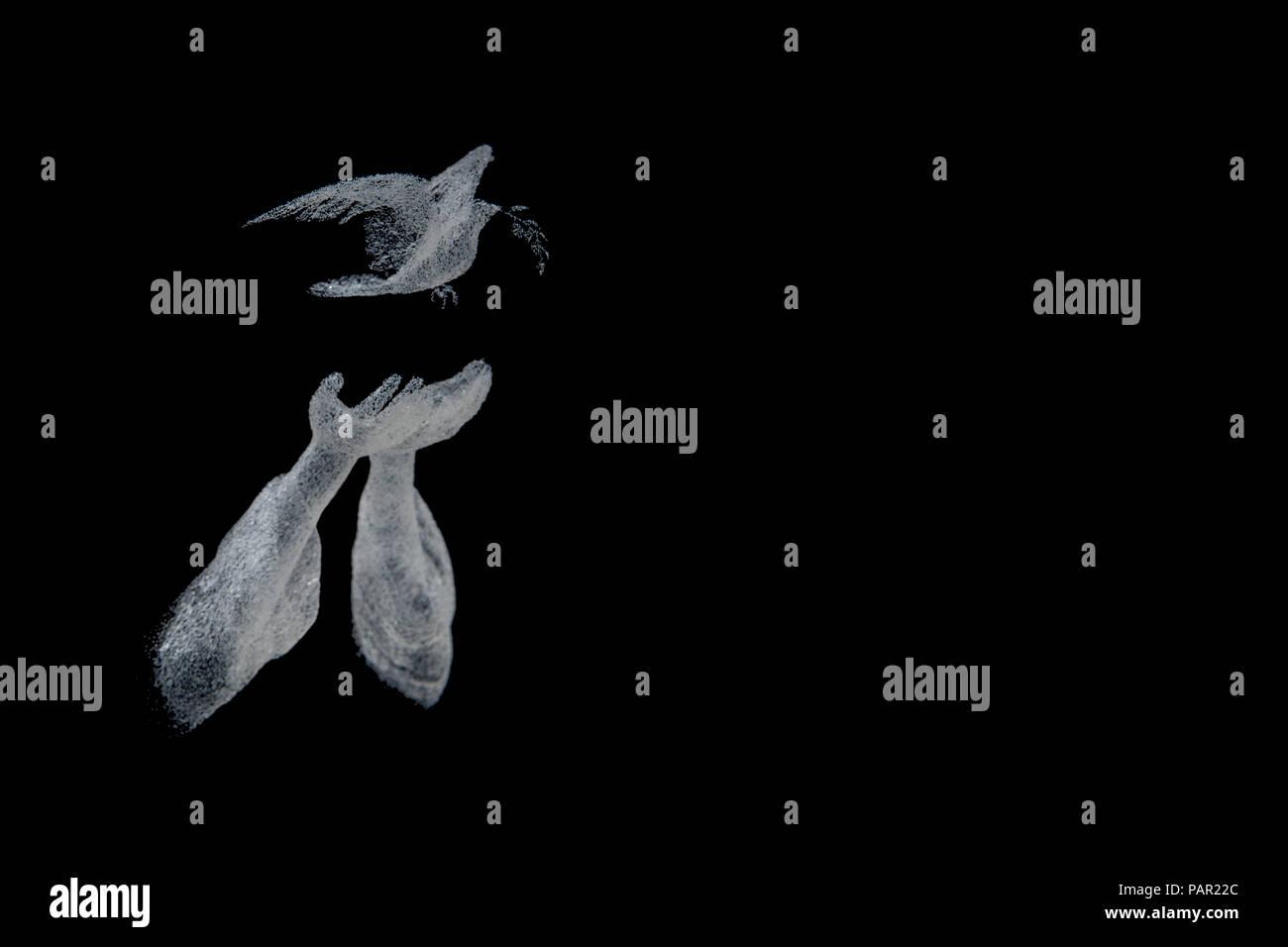Una coppia di mani releaseing una colomba con un alloro in è impostato a becco contro uno sfondo nero. Questa immagine mostra la psycholocal teoria della Gestalt Immagini Stock