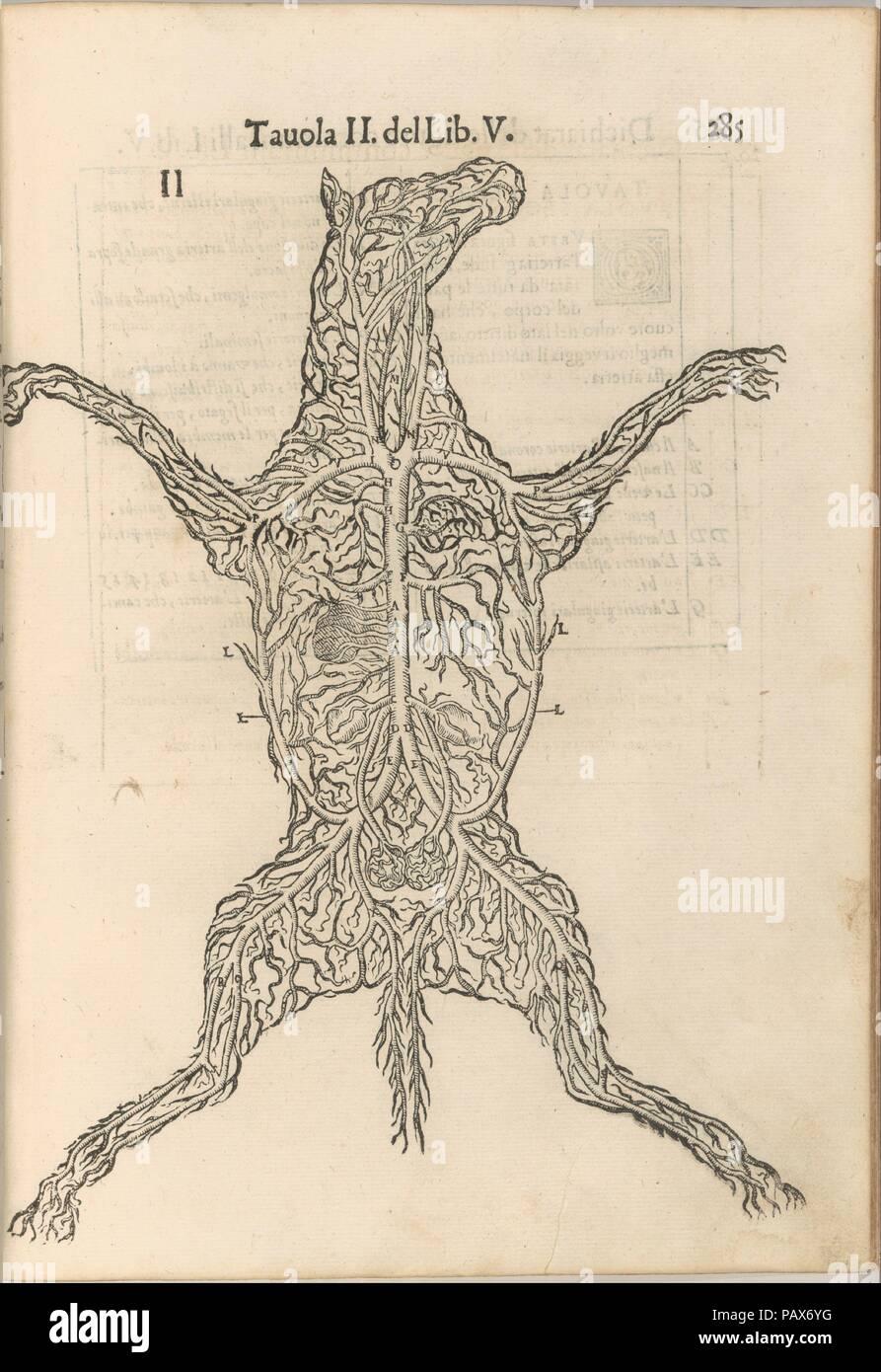 Anatomia del Cavallo. Infirmita del Cavallo. Autore: scritto da Carlo Ruini. Dimensioni: complessivo: 13 1/16 x 9 1/16 x 2 1/2 in. (33,1 x 23 x 6,4 cm). Stampante: stampato da A. Bindoni il giovane , Venezia. Data: 1602. Museo: Metropolitan Museum of Art di New York, Stati Uniti d'America. Immagini Stock