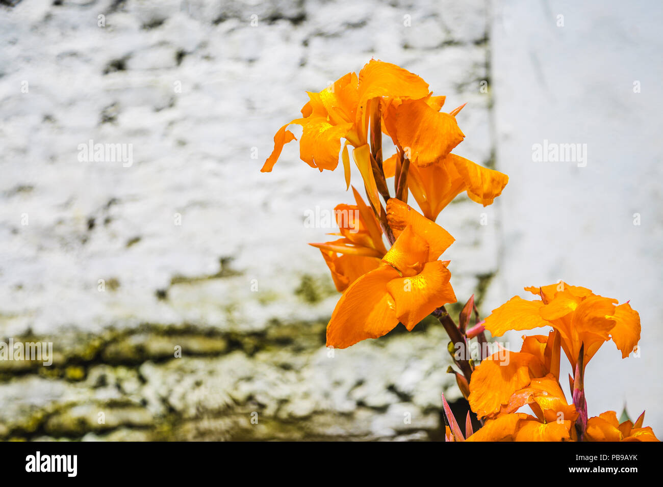 Abstract Natura Naturale Giallo Sfondo Fiori Di Primavera E Estate